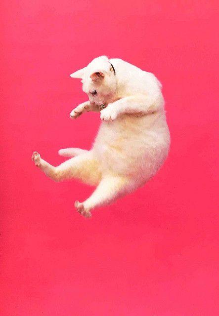 これは可愛い,癒し,ネコ,画像,まとめ043