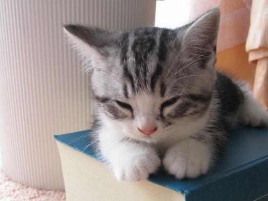 癒され過ぎる,子猫,画像,まとめ043