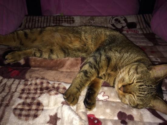 猫,可愛すぎる,ネコ,画像,まとめ043