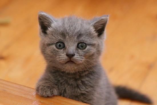 癒され過ぎる,子猫,画像,まとめ044