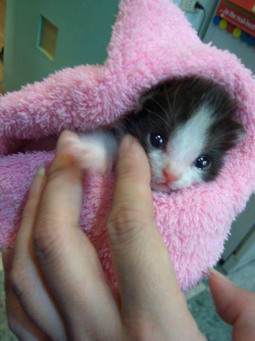 癒され過ぎる,子猫,画像,まとめ047