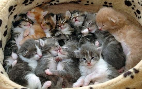 癒され過ぎる,子猫,画像,まとめ048