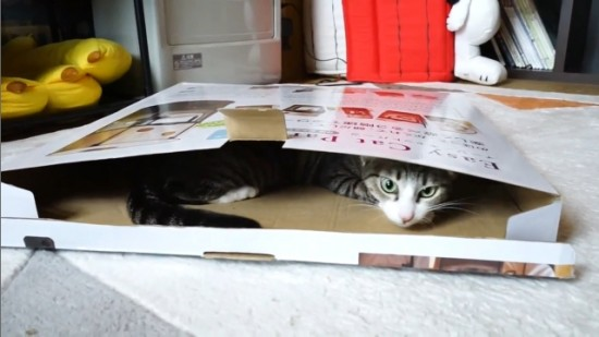 猫,可愛すぎる,ネコ,画像,まとめ051