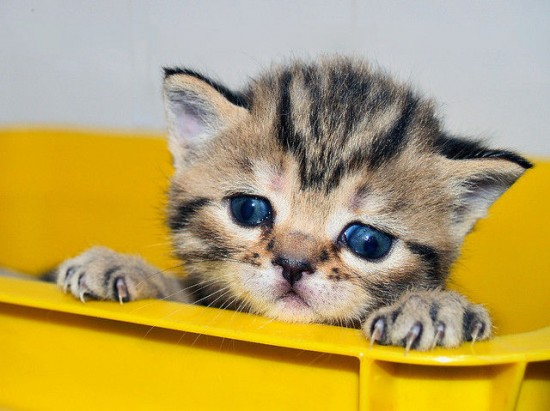 癒され過ぎる,子猫,画像,まとめ052