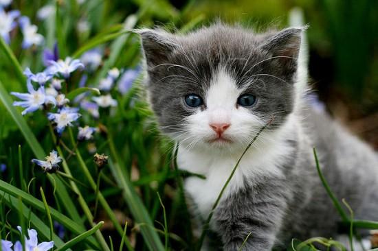 癒され過ぎる,子猫,画像,まとめ053