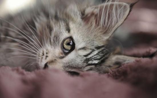 癒され過ぎる,子猫,画像,まとめ054