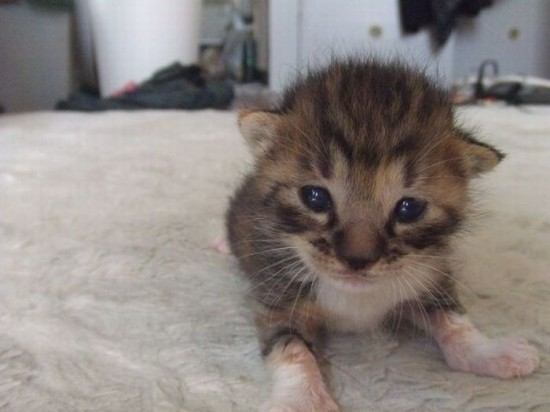 癒され過ぎる,子猫,画像,まとめ056