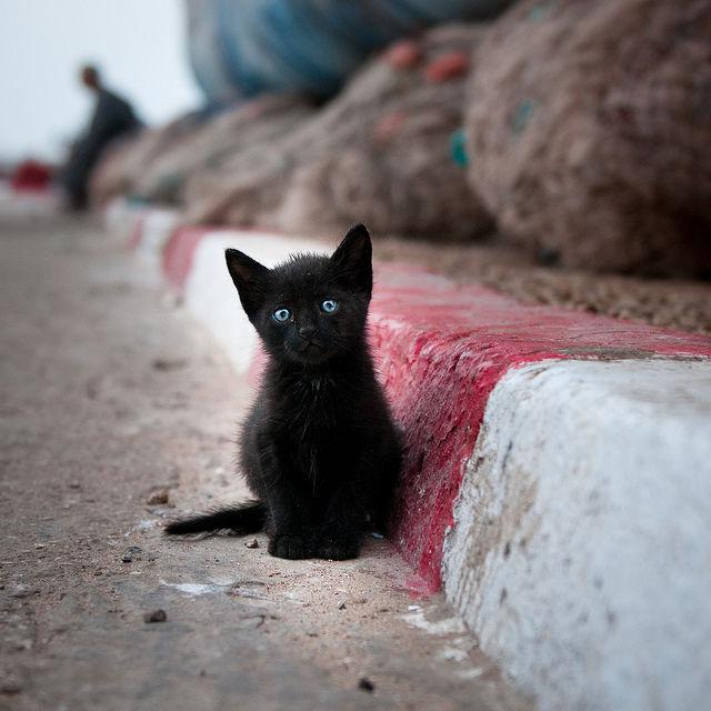 癒され過ぎる,子猫,画像,まとめ058