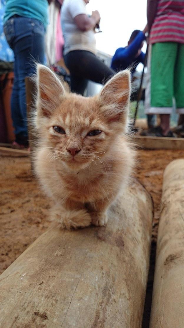 猫,可愛すぎる,ネコ,画像,まとめ060
