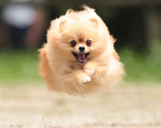 犬,ワンちゃん,画像,まとめ002