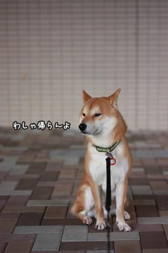 dog008