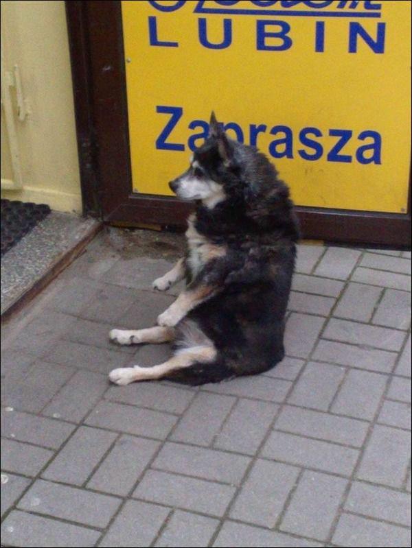 犬,ワンちゃん,画像,まとめ017