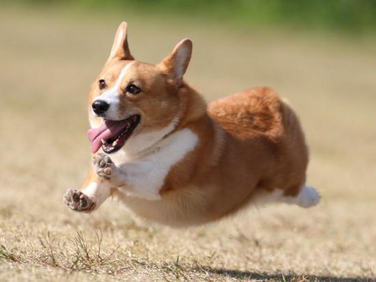 犬,ワンちゃん,画像,まとめ019