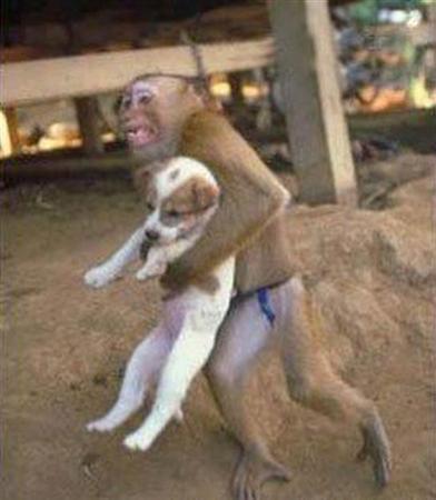 思わず笑ってしまう,動物,面白,画像001