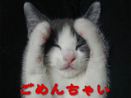 笑ってしまう,動物,面白,画像006