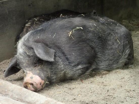 可愛すぎる,動物,寝顔,画像008