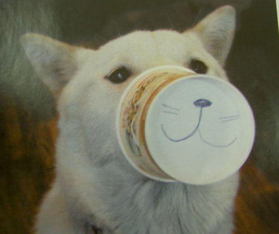 思わず笑ってしまう,動物,面白,画像011
