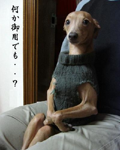 笑ってしまう,動物,面白,画像011