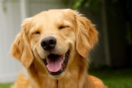 笑顔,素敵,動物,画像011
