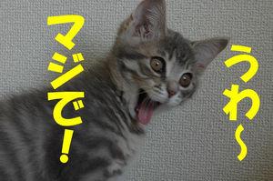 笑ってしまう,動物,面白,画像012