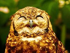 表情,癒される,フクロウ,画像015