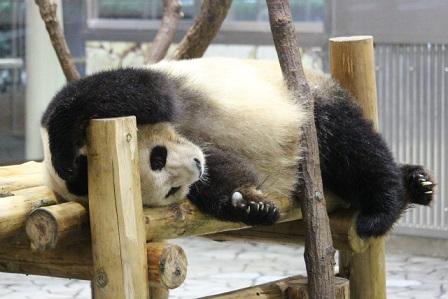 可愛すぎる,動物,寝顔,画像020