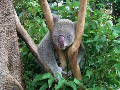 可愛すぎる,動物,寝顔,画像022