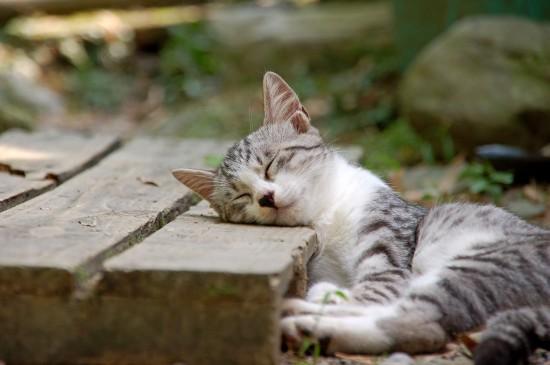 可愛すぎる,動物,寝顔,画像024