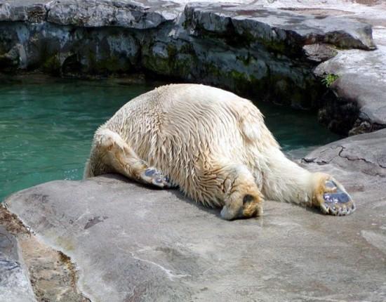可愛すぎる,動物,寝顔,画像025