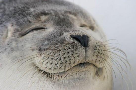 笑顔,素敵,動物,画像028