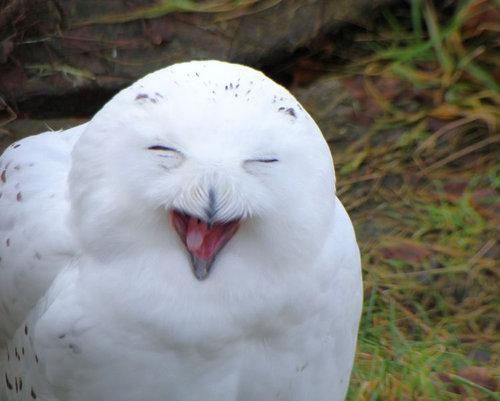 笑顔,素敵,動物,画像029