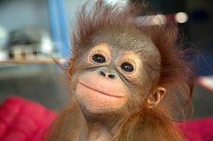 笑顔,素敵,動物,画像032