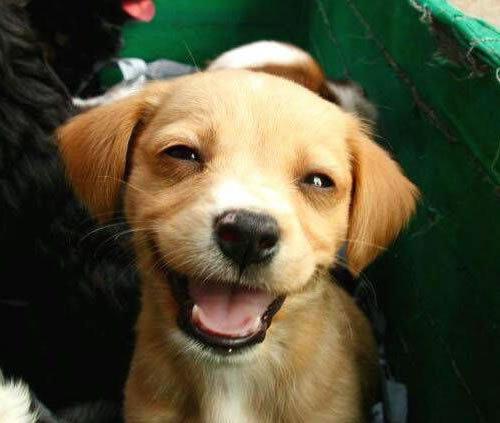 笑顔,素敵,動物,画像033