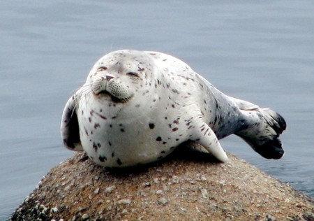 笑顔,素敵,動物,画像044