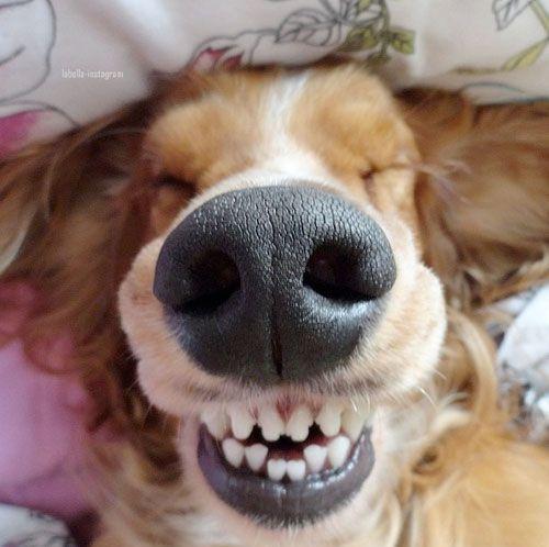 笑顔,素敵,動物,画像046