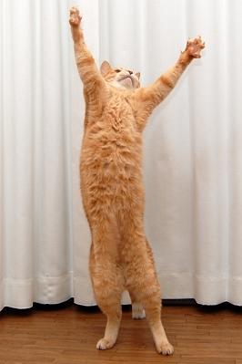 可愛い,ネコ,画像,まとめ001