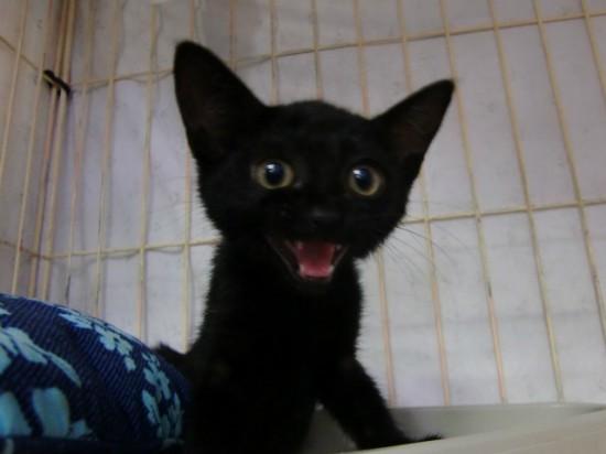 ラブリー,黒猫,画像,まとめ001