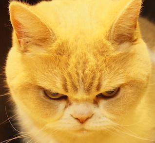 ちょい悪,猫,画像,まとめ001