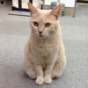 職場,猫,画像,まとめ002