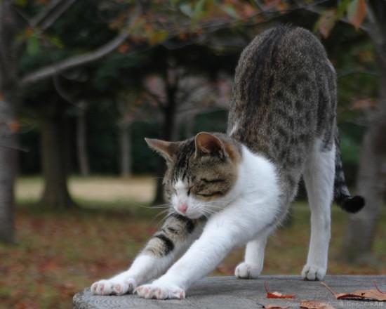 可愛い,ネコ,画像,まとめ002