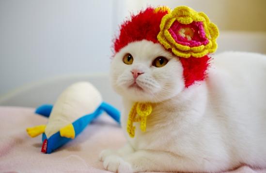 キュン,帽子,ネコ,画像,まとめ002