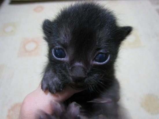 ラブリー,黒猫,画像,まとめ002
