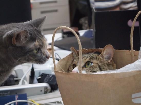 職場,猫,画像,まとめ003