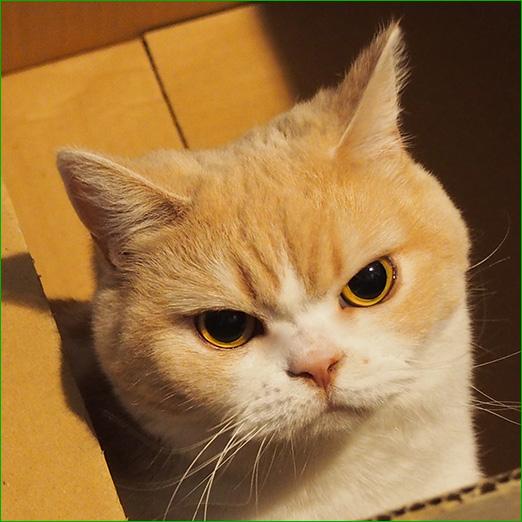 可愛い,ネコ,画像,まとめ003
