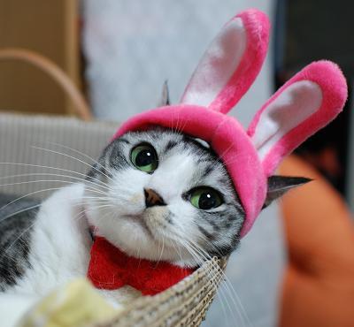 キュン,帽子,ネコ,画像,まとめ004