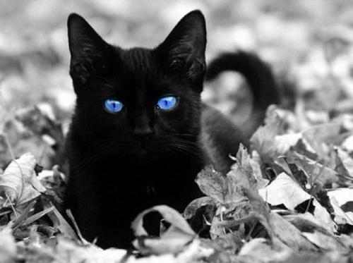 ラブリー,黒猫,画像,まとめ004