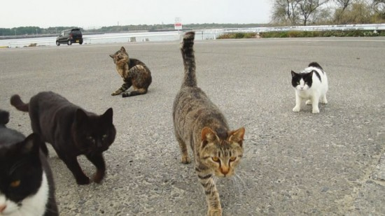 ちょい悪,猫,画像,まとめ004