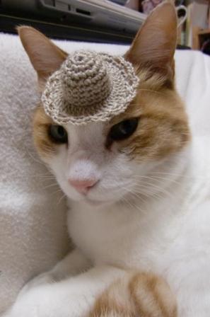 キュン,帽子,ネコ,画像,まとめ005