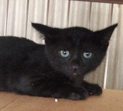 ラブリー,黒猫,画像,まとめ005