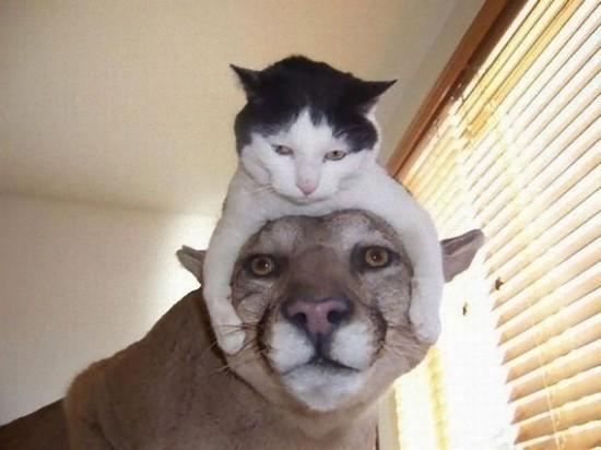 キュン,帽子,ネコ,画像,まとめ006